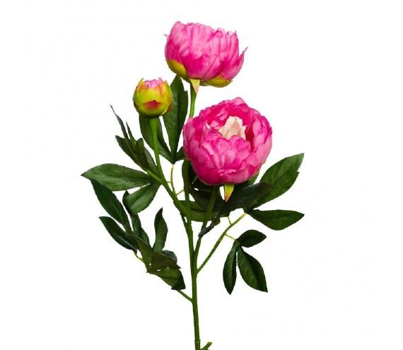 Цветок Пион розовый