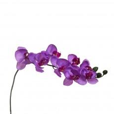 Орхидея лиловая