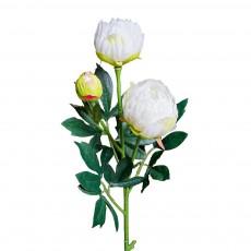 Цветок Пион кремовый